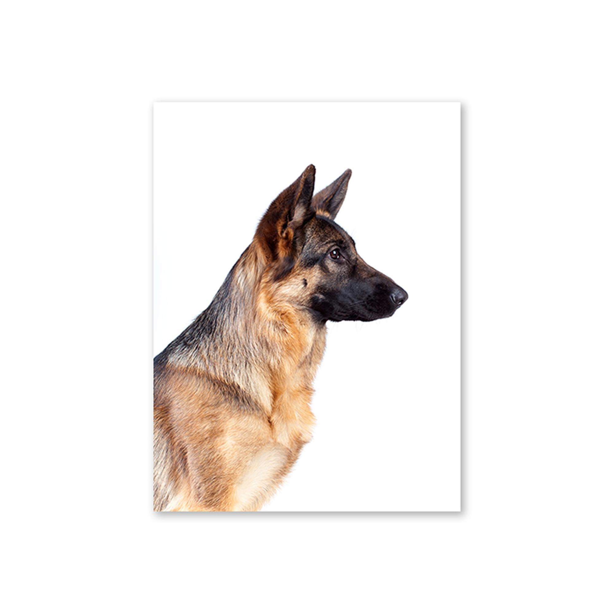 Dog German Shepherd Card The Linen Press